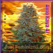 Advanced Early Widow buy cannabis pick and mix seeds discrete